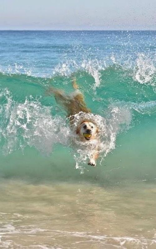 Wave riding dog