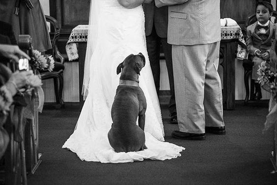 Wedding with dog.