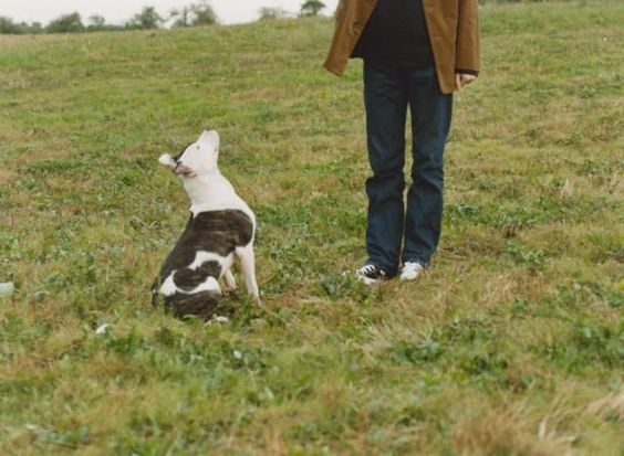 Well-behaved dogs are a joy to share your life with. But it can be difficult to figure out exactly how to train a dog. Follow this dog training program for six weeks, and you're sure to see improvements in the dog's behavior.