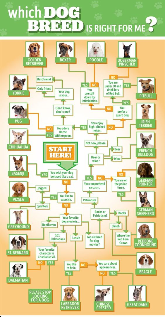 What dog is right for me? It is important to match these principles with your routine. Have you have what it takes to take care of a dog?