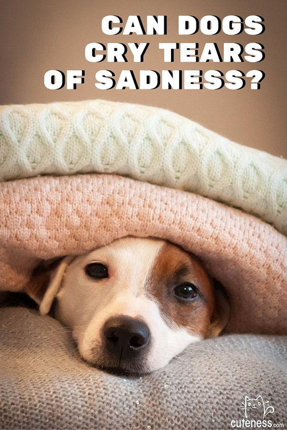 When your dog is sad, can he or she cry?