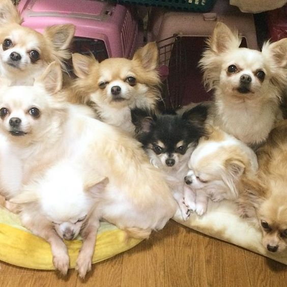 Yappy Dogs moooooneeeeet