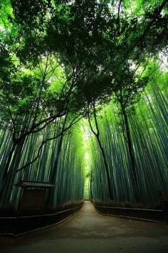 竹林の道 京都 名所 嵯峨嵐山 人気