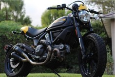 2 Week Old Scrambler | Ducati Scrambler Forum