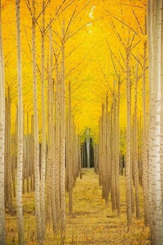 25 Photos of Nature That will not Leave you Indifferent - Aspen Cathedral, Vail, Colorado