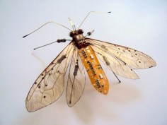 AD-Circuit-Board-Winged-Insects-Dew-Leaf-Julie-Alice-Chappell-5