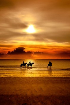 Amazing natural colours: #horses on the beach at sunset