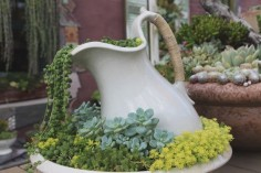 An old wash basin used for plants
