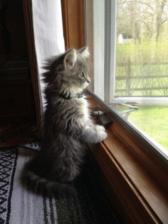 And this curious peeper. | 39 Overly Adorable Kittens To Brighten Your Day
