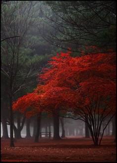 Autumn~
