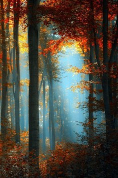 ✿ڿڰۣ Autumn Forest #nature #photography