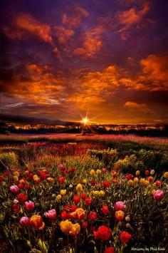 ~~Bear Witness to the Light | Tulip sunrise, Wisconsin by Phil Koch~~
