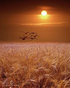 beautiful! sunset