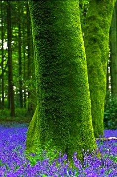 Bluebell Wood - ©Andy Small -