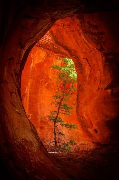Boynton Canyon -Sedona, Arizona