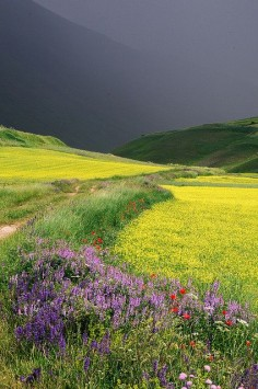 Castelluccio, Umbria, Italy. The colors are absolutely amazing. The dark sky over the field.