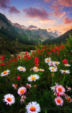 Daisy sunset at Alpine Lakes Wilderness in the Cascade Mountains of Washington • photo: Danny Seidman on 500px