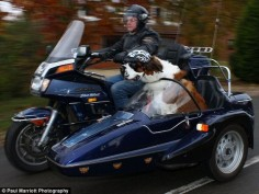 Dog owning it in a sidecar
