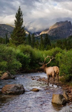 Elk at Rocky Mountain National Park in Colorado • photo: Andrew Young on 500px