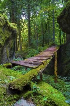 Forest Bridge, British Columbia