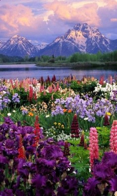 Grand Teton National Park -  we could honeymoon in the lodge at Yellowstone & this is close