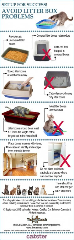 How to Stop Litter Box Problems Before They Begin | Catster