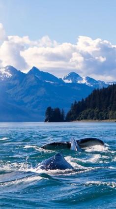 Humpback Whales in Alaska