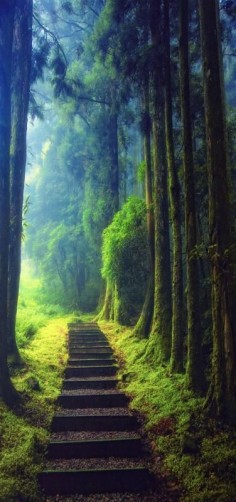 'Keep on senderismo' Escalada, niebla, bosque, Taoyuan, Taiwán.