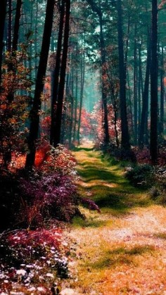 Magical forest in Poland • orig. source not found