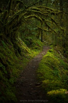 Magical trails wind through the temperate rainforests East of Cottage Grove, Oregon by ~Mike Potts Photography~