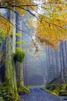 Misty Path, Japan photo via forest