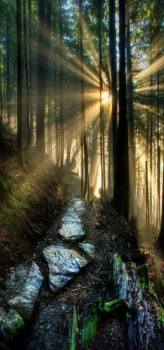 'My path' Ketchikan Forest's sunbeams, Alaska by Carlos Rojas