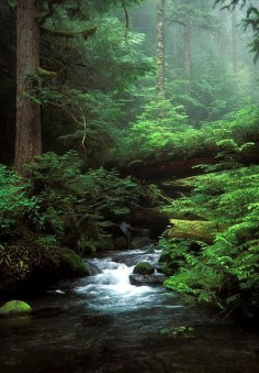 Olympic National Park, Washington