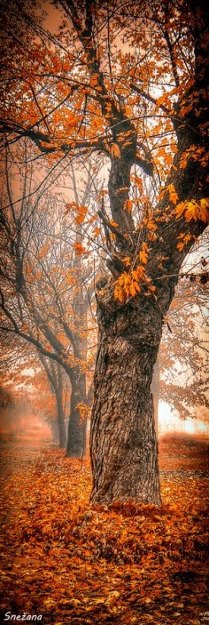 "✯ ""One foggy morning ..."""