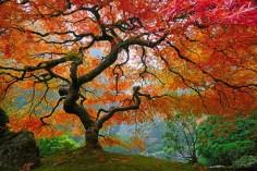 Portland tree