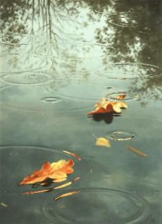 Raindrops in Autumn rain storm water animated autumn gif drops