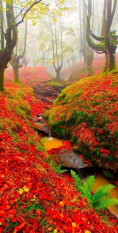 Red Forest, Cantabri Beautiful