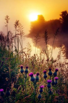 Scottish  by David Mould on 500px