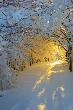 Snowy sunrise | by Adamadam s on Flickr