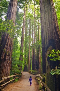 Standing Tall in Redwood Forest - California, USA | Incredible Pictures and another man made cathedral of sorts