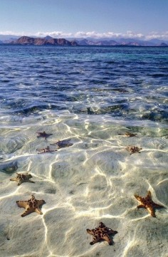 Starfish beach, Grand Cayman. I will go here one day!!