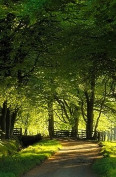 Summer Country lane  via Bernard Toulgoat