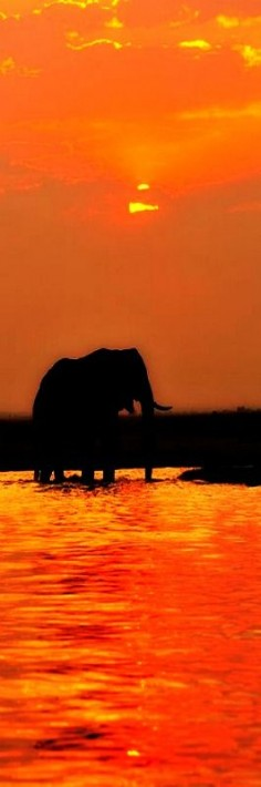 sunset in Chobe National Park, Botswana