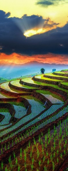 Sunset over Rice terraces in Chiang Mai, Thailand #BeautifulNature #Sunsets #Thailand