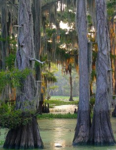The largest cypress forest in the world at Caddo Lake, Texas/Louisiana (by dave hensley)