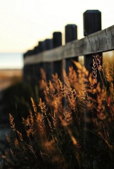 This picture has a shallow depth of field and a very central line (the fence) that leads your eye into the distance, which is all blurry, whereas in front the grass is very clear.