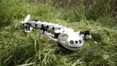 This skeleton robot salamander just wiggled its way into my heart