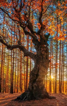 tr3slikes: tr3slikes:500px / The King Of the Forest by Evgeni Dinev)