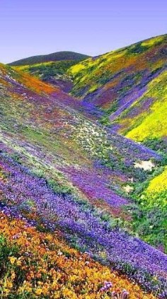 Valley Of Flowers, Himalayas Tibet.
