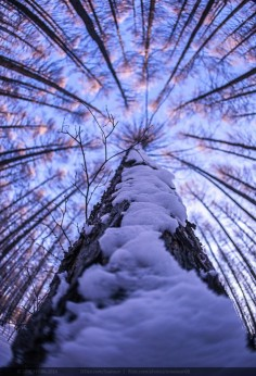 Wow! What a shot. #photography #perspective #trees   Via 500px, Flickr; photo credit SimonSun   pinned via @Arbor Day Foundation